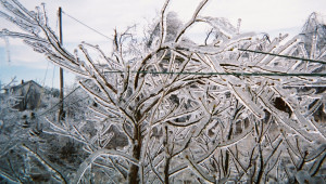 Ice-covered tree limbs pull electrical lines down, causing outages at the worst time of the year--when it's winter, cold and dark.