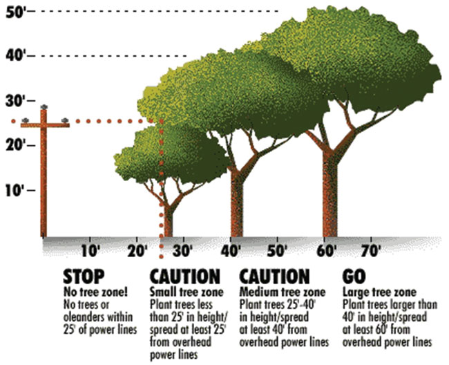 Plant Trees In Right Place